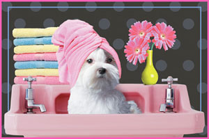 Cindy's Dog Grooming - Oklahoma City / Warr Acres, OK